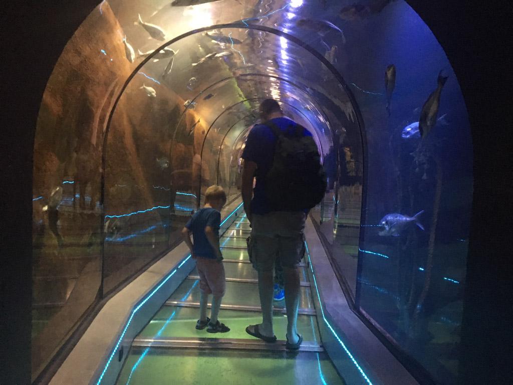 Via een tunnel door het water lopen we naar het zeeaquarium.