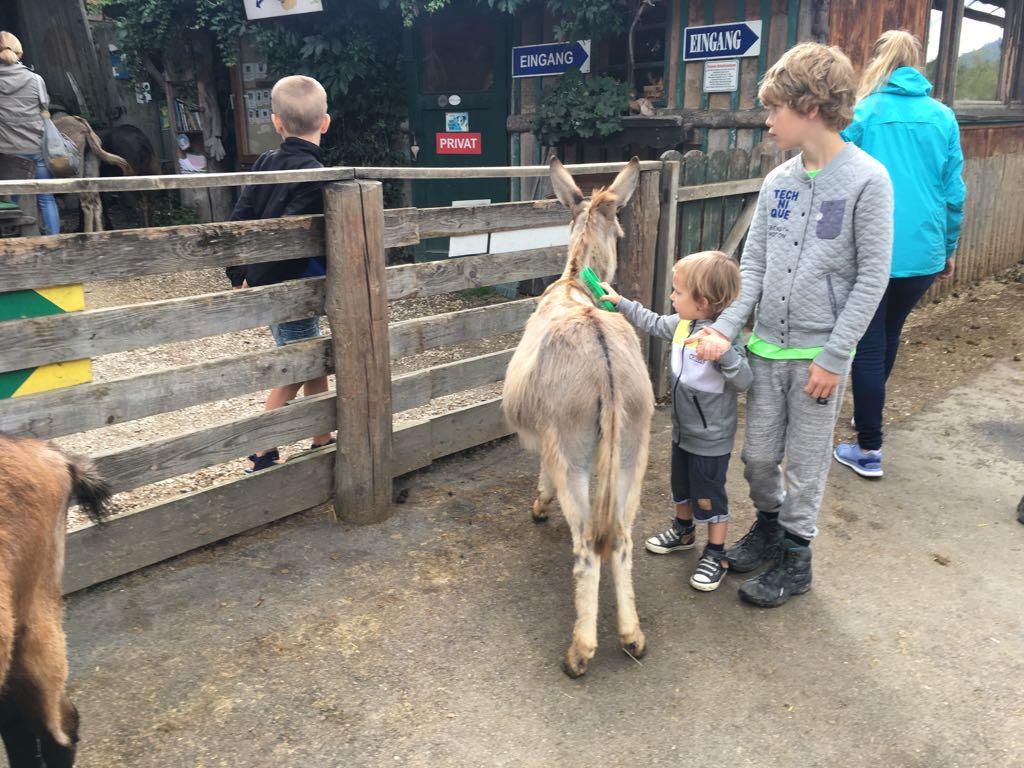 De ezels vinden het heerlijk om geborsteld te worden.
