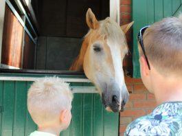 paardenkamp8-12