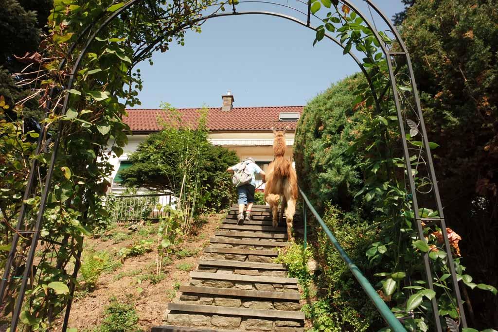Bijna thuis. Kijk mijn lama kan trap lopen.