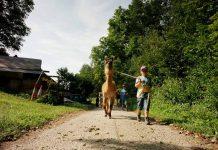 wandelen-met-lamas-bij-steirerlama Wandelen met lama's bij Steirerlama is tof!