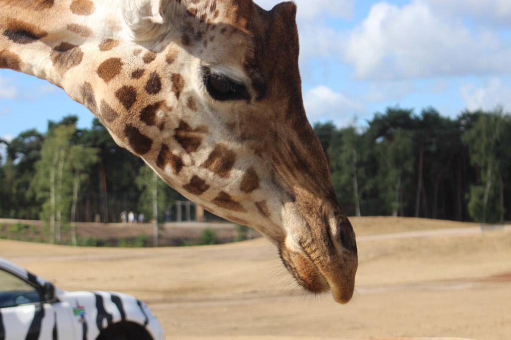 De dieren van zo dichtbij zien? Dat kan tijdens het WNF Rangers Zomerkamp.
