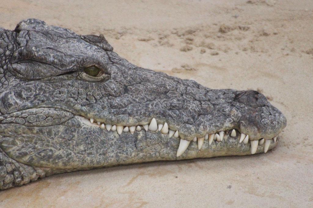 Bent fotografeert er de hele week aardig op los. De krokodillen weet hij mooi vast te leggen.