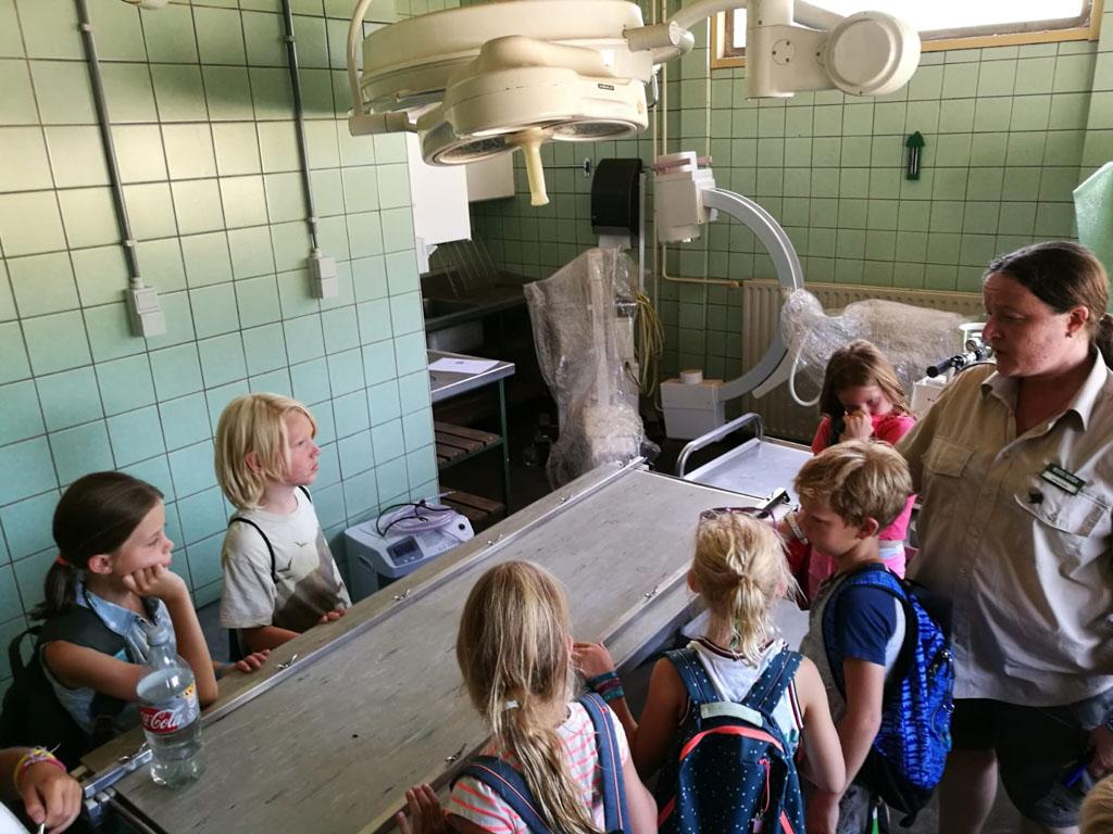 Een kijkje in de operatiekamer van de Beekse Bergen.