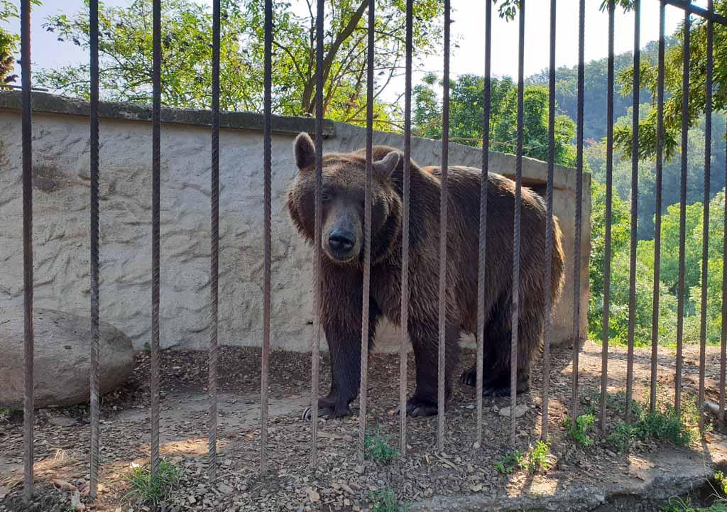 Alle beren in de opvang hebben nu een beter leven dan ze hadden