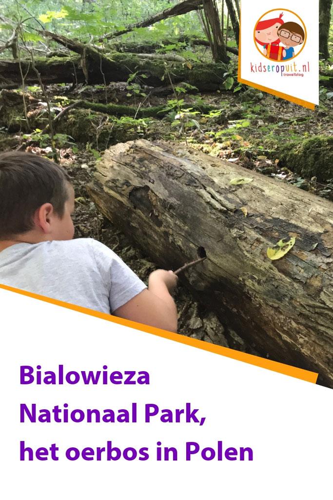 Tips om Bialowieza Nationaal Park te ontdekken.