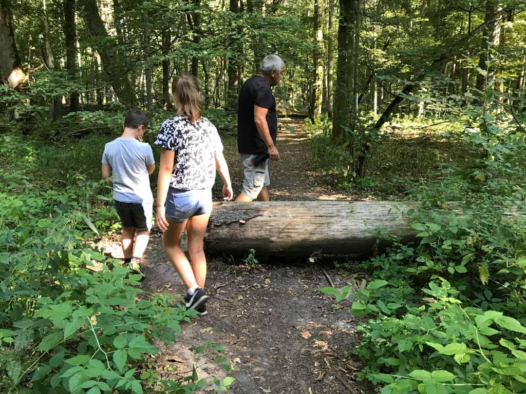 Alleen om de paden begaanbaar te houden worden bomen doormidden gezaagd.