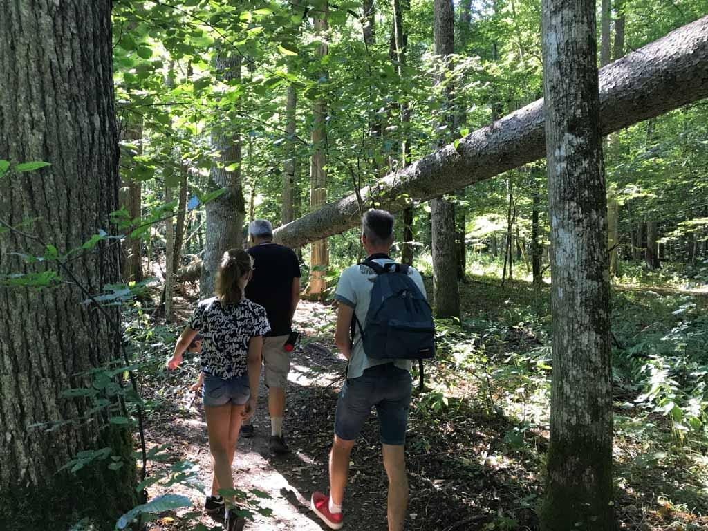 Wandelen door het oerbos is hier en daar wel avontuurlijk.