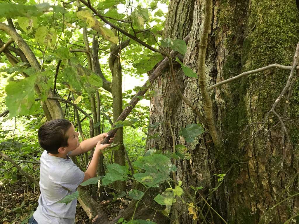 Later mag hij hetzelfde doen bij een grote boom, met een nog groter gat van een specht.
