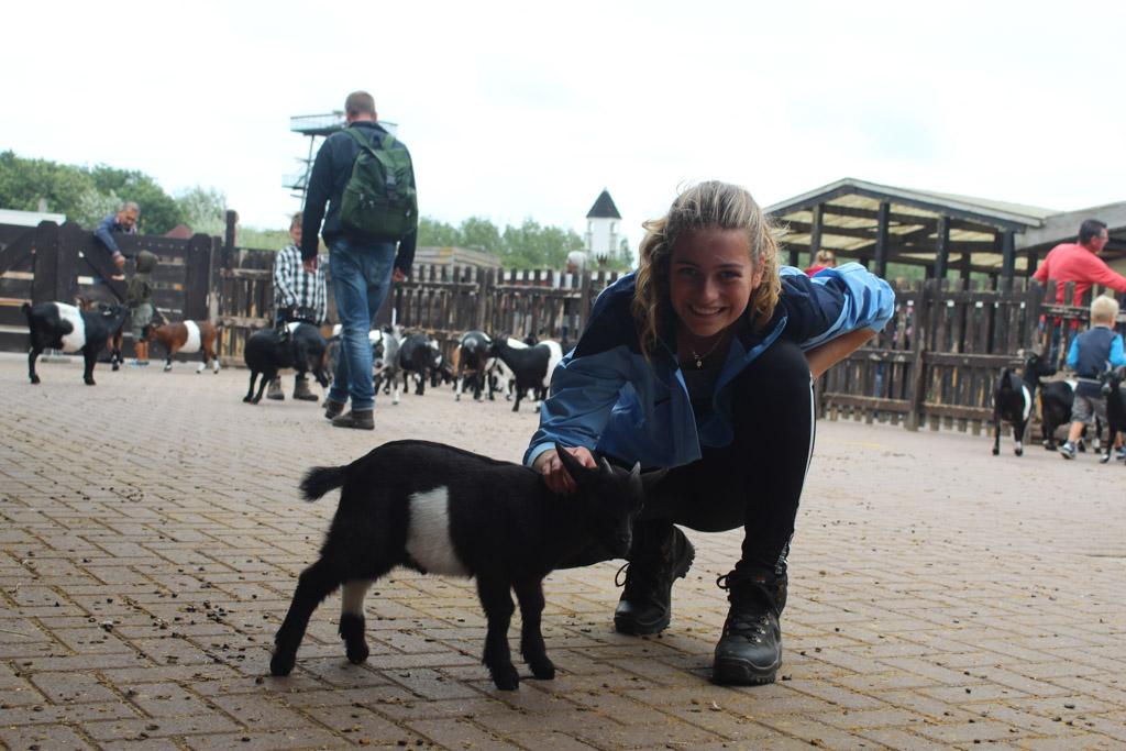 Geen mensenvrees bij de geitjes van de kinderboerderij.
