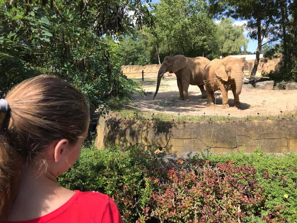 De olifanten zijn de lievelingsdieren van mijn dochter.