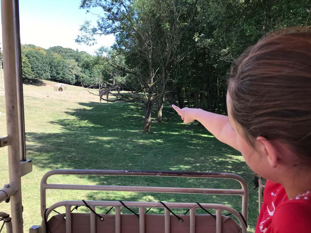 Kijk, een giraffe!