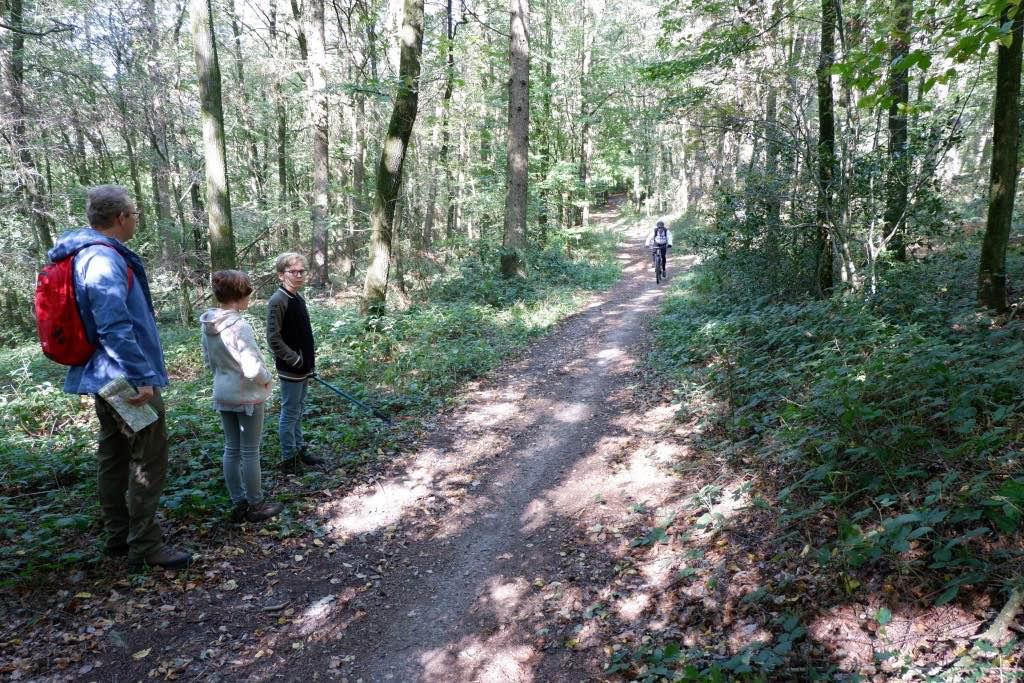 Wandelen in het Vijlenerbos