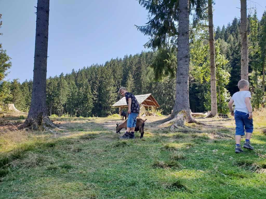 Even de natuurlijke grasmaaiers aaien valt enorm in de smaak de-leukste-kinderactiviteiten-in-karinthie-14