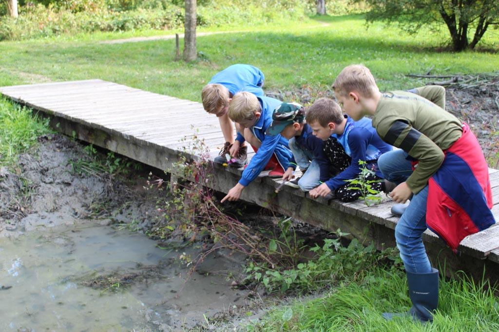 In de beekjes vinden de kinderen veel waterdiertjes.