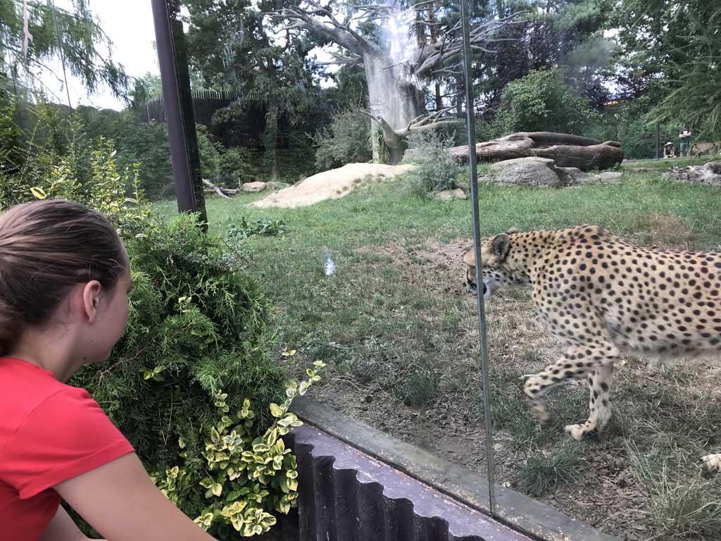 We kunnen de dieren goed zien in hun verblijven.