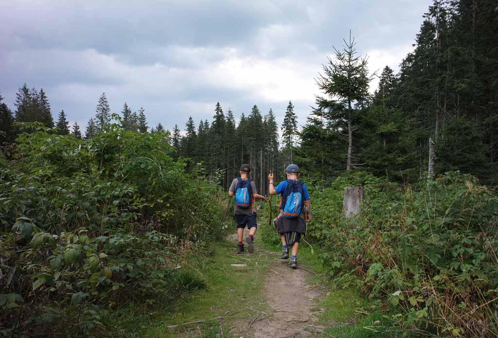 Vergeet je muggenspul niet anders ben je een wandelend buffet in het bos wandelen-in-het-tatra-gebergte-met-kinderen