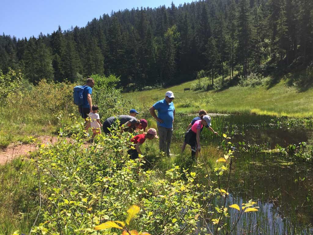 Na een stukje in het bos komen we bij een vallei, hier liggen de moerassen van de WIlder Kaiser.
