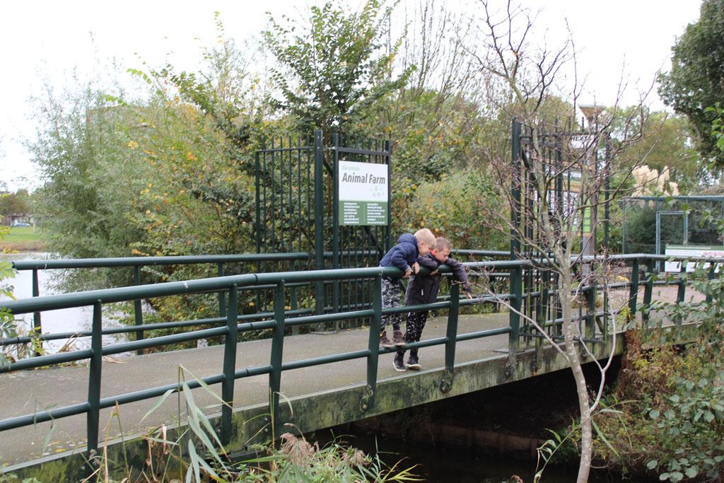 Koen en Tijmen ontdekken karpers in het water rondom Animal Farm. Het dierentuintje ligt op een eiland in het Willem-Alexanderplantsoen in Beverwijk.