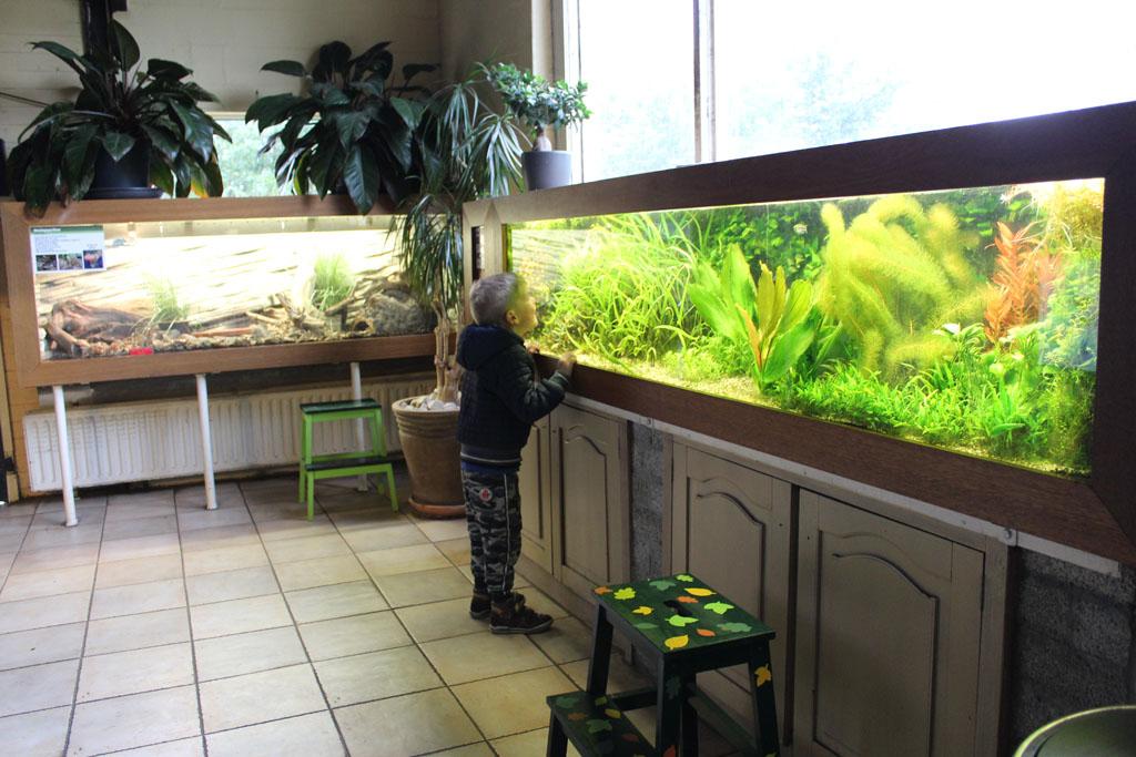 Links het terrarium met de koningspython en Tijmen zoekt in het aquarium naar mooie vissen.