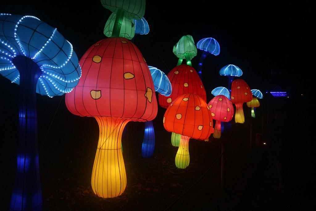 Grote gekleurde paddenstoelen.