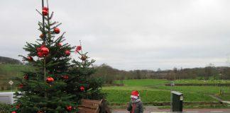 Kerstboom in het Heuvelland
