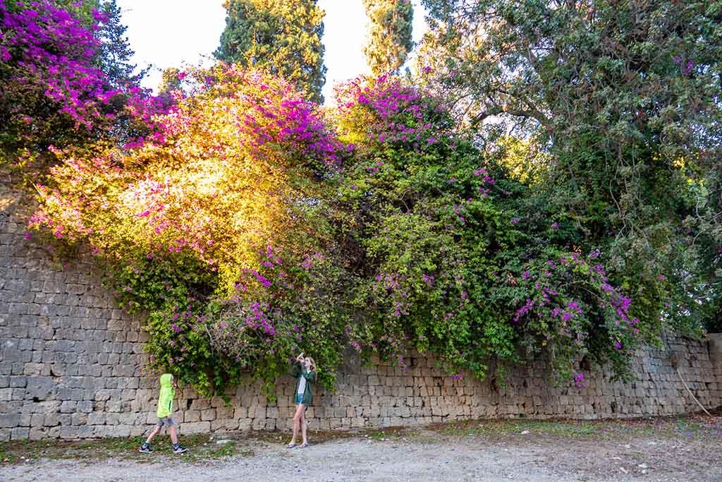 Overal rondom de muren groeien bomen, struiken en bloemen