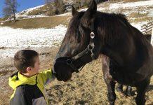 In de wei ontmoeten we de twee andere paarden.