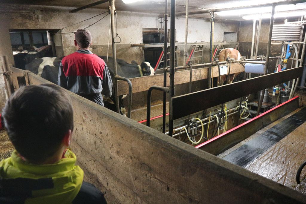 Gasten mogen helpen met het melken van de koeien. Onze jongste kijkt liever.