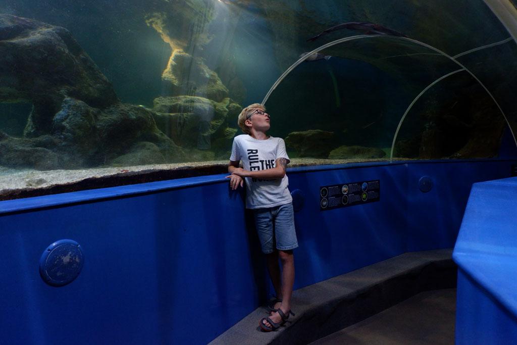 In het aquarium is een tunnel die je onder het grote bassin laat doorlopen.