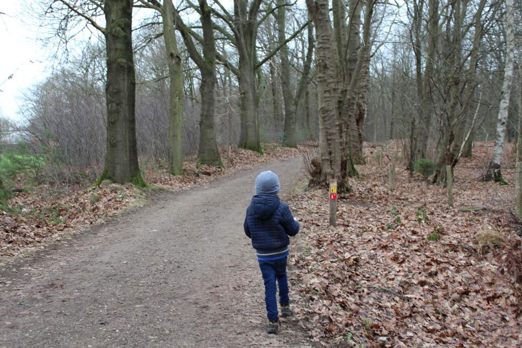 Wij lopen de rode wandelroute over het Leersumse Veld: De Steen van Mariken.