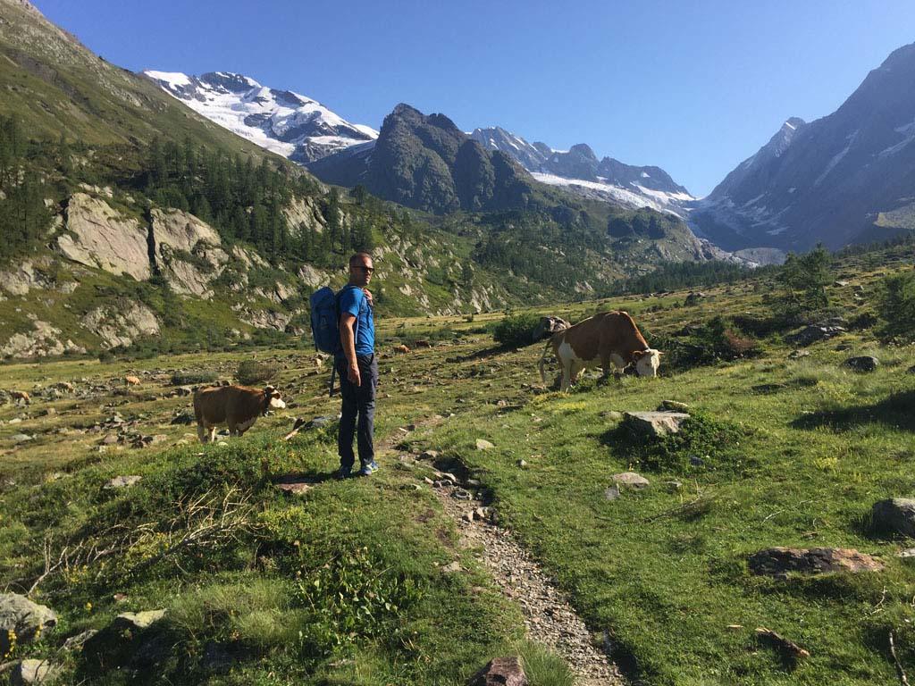 De wandeling door het Lötschental gaat langs groene bergweides, met koeien natuurlijk.