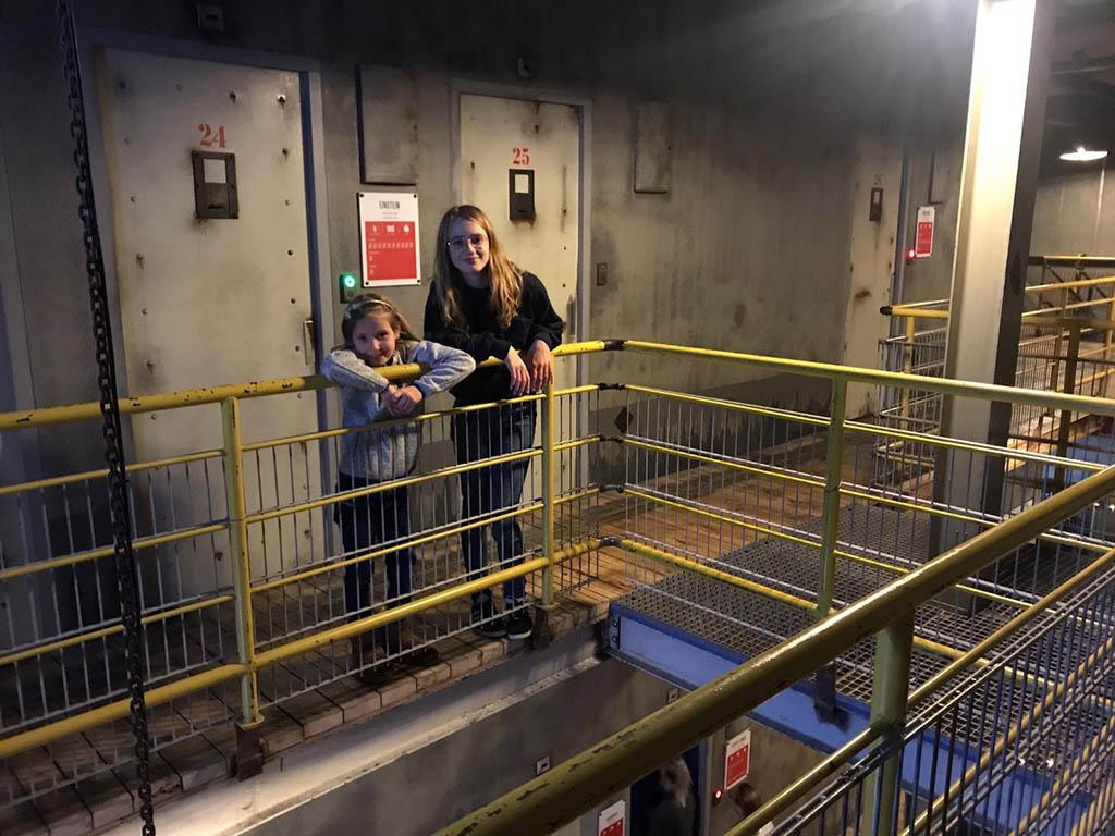 Prison Island bestaat uit verschillende gevangeniscellen
