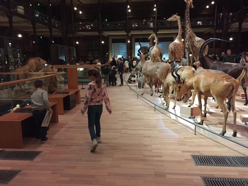 Bezoekers kunnen letterlijk tussen de opgezette dieren doorlopen.