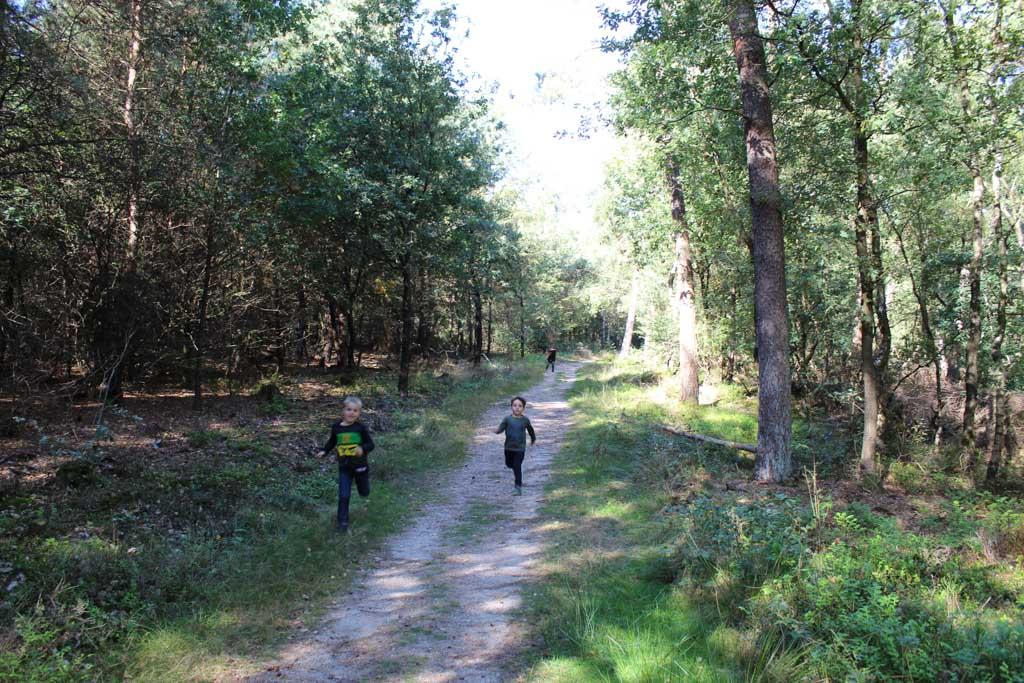 Heerlijk uitrazen in het Amerongse bos. De route is vlak en we merken niet dat we op een berg lopen.