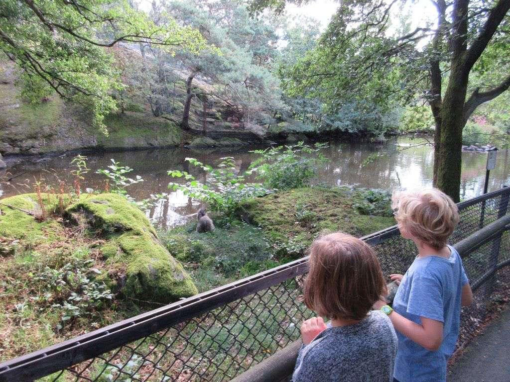 Een bezoekje aan de gratis dierentuin het Slottsskogen-stadspark in Goteborg