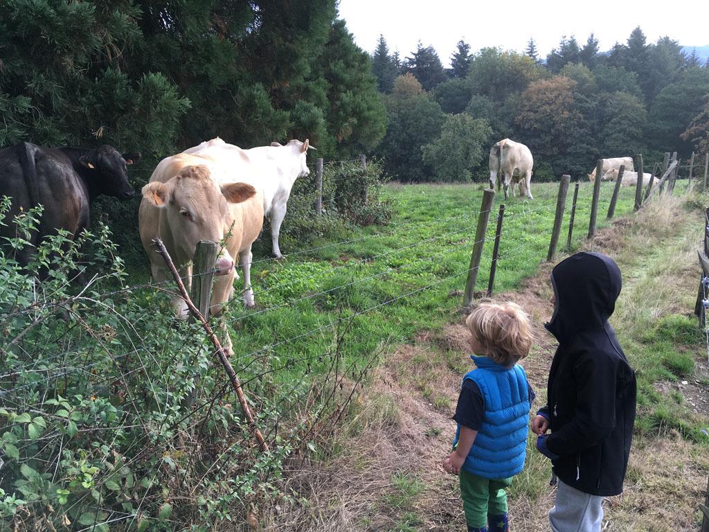 Altijd leuk, dieren tegenkomen onderweg.