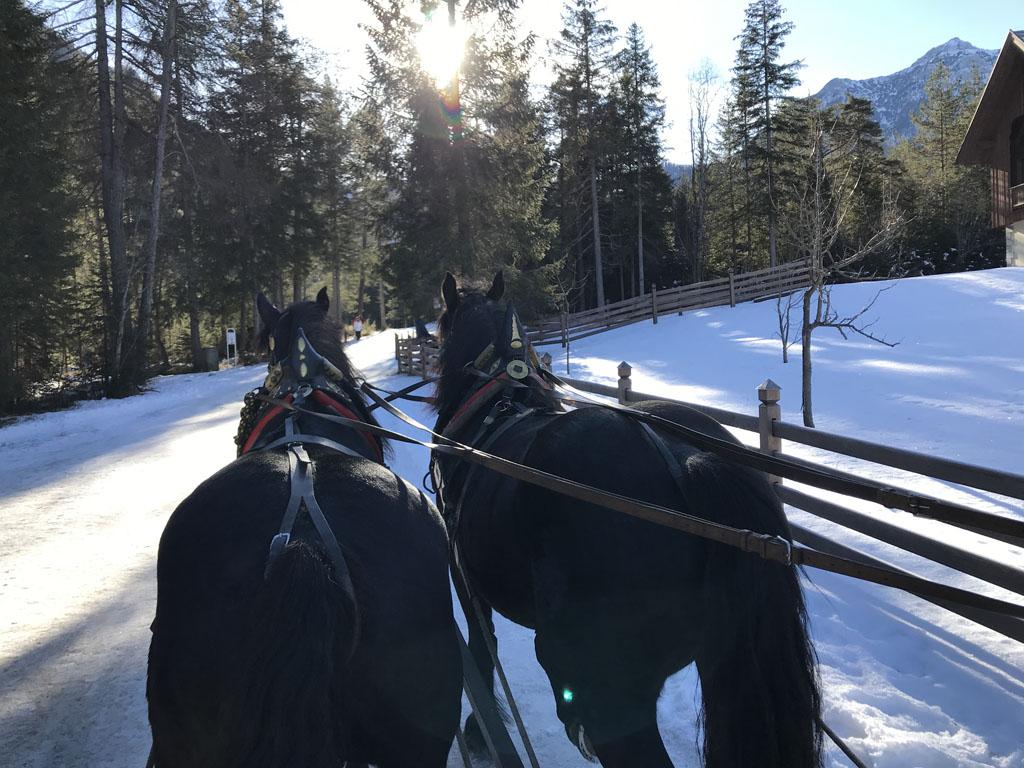 Mooie rit met de paardenkoets.