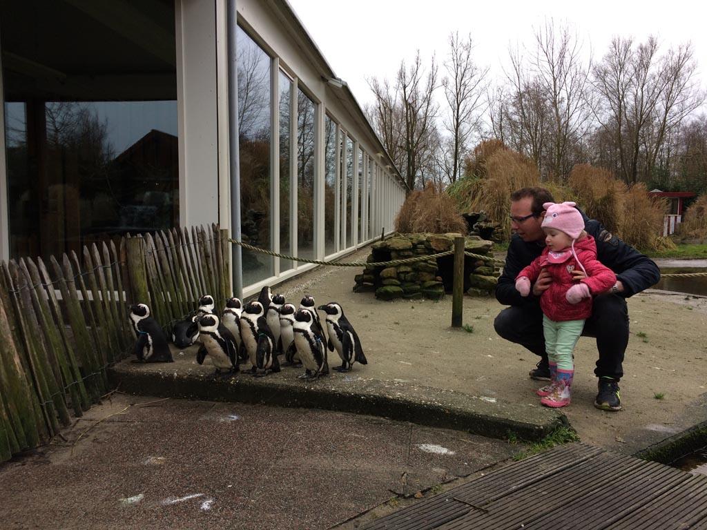 Het is heel gezellig samen met de pinguïns in Aqua Zoo Friesland.