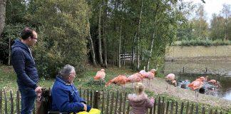 Samen met overgrootvader en papa naar de flamingo's kijken.