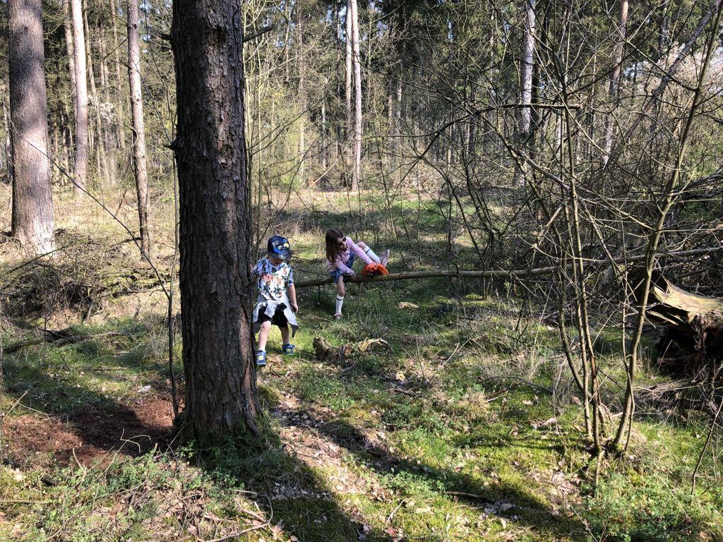 Dwars door het bos op zoek naar het volgende paaltje.