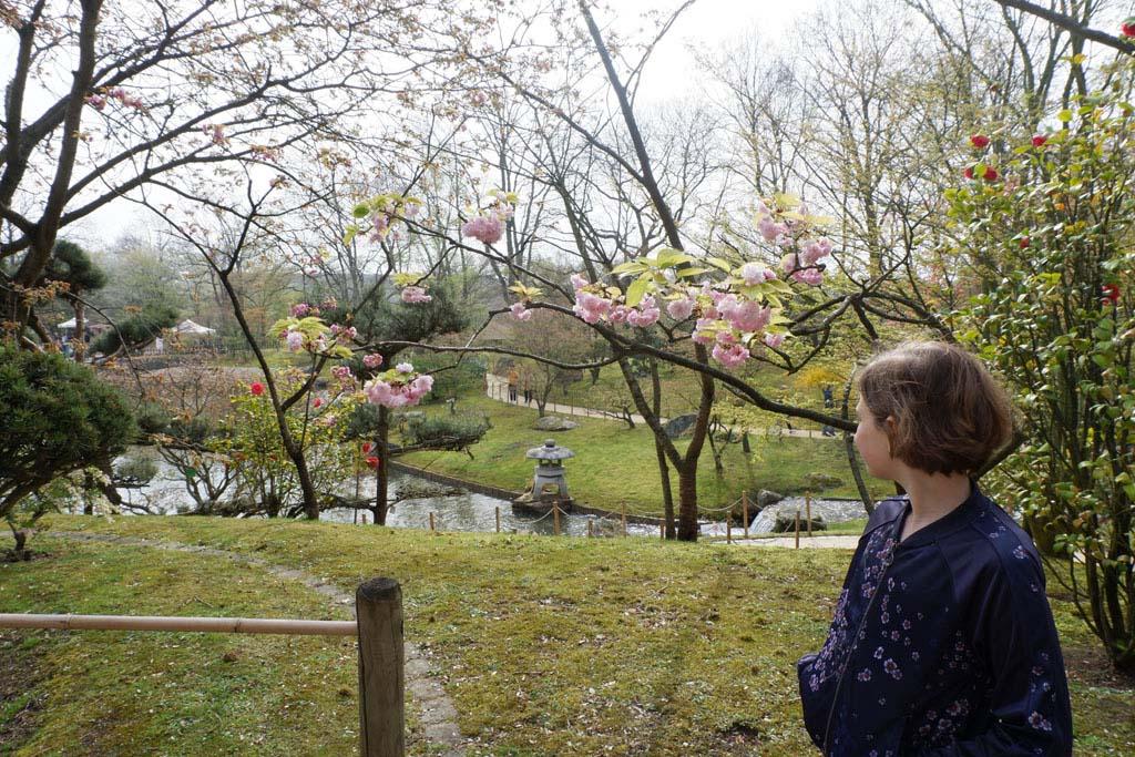 De bloesem begint te bloeien in de Japanse tuin in Hasselt