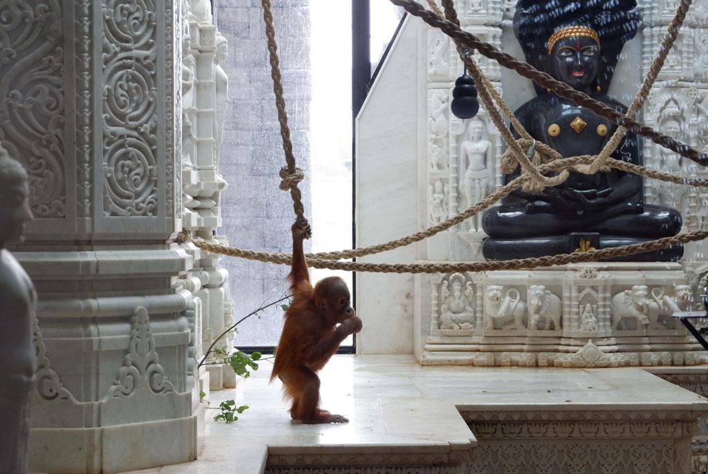 De spelende baby-orang-oetan woont in een paleis