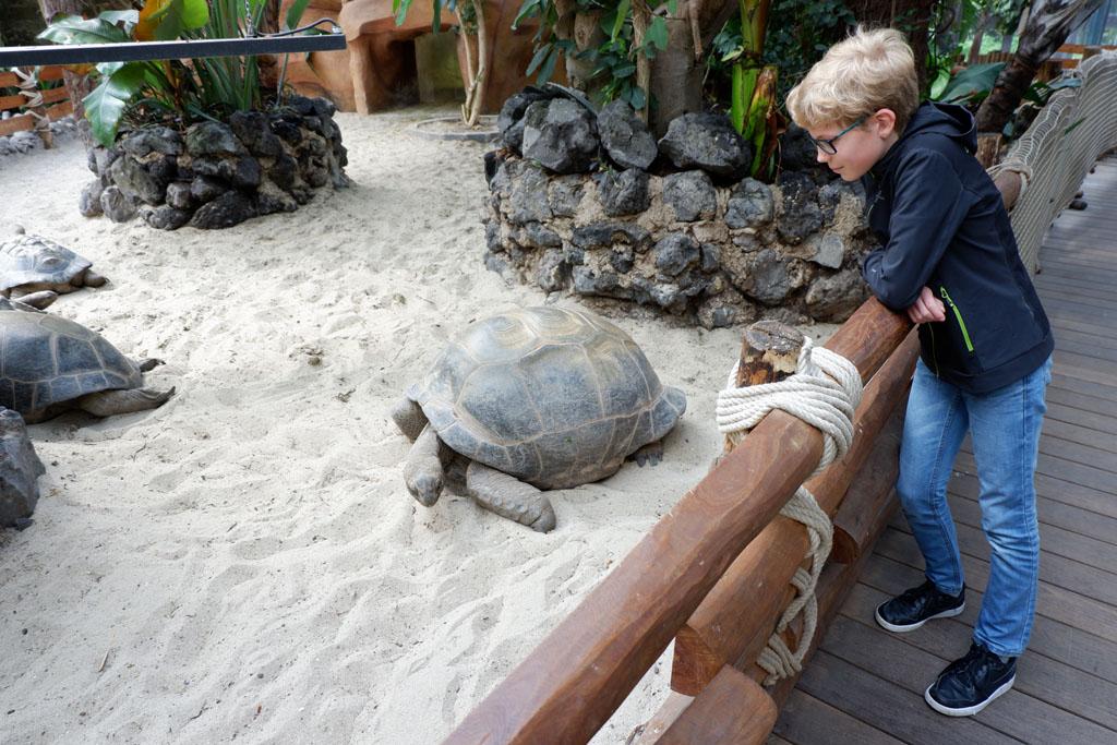 In de oase van Pairi Daiza leven onder andere grote landschildpadden