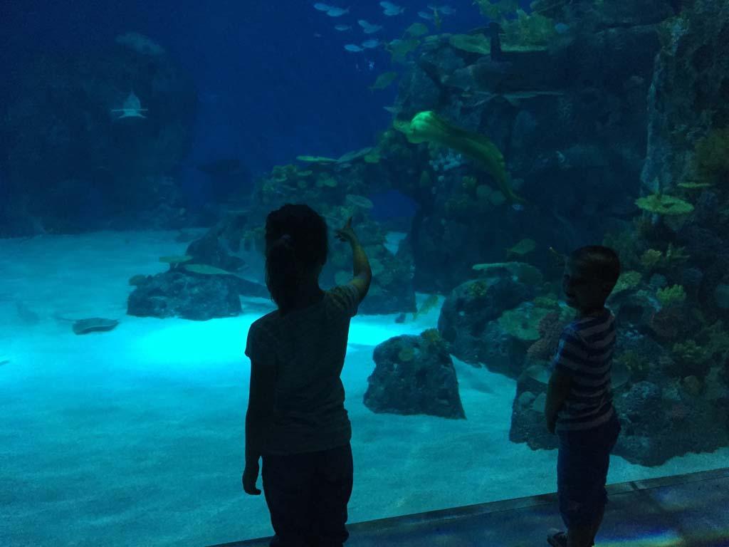 Zoveel te zien in de aquaria van Den Blå Planet.