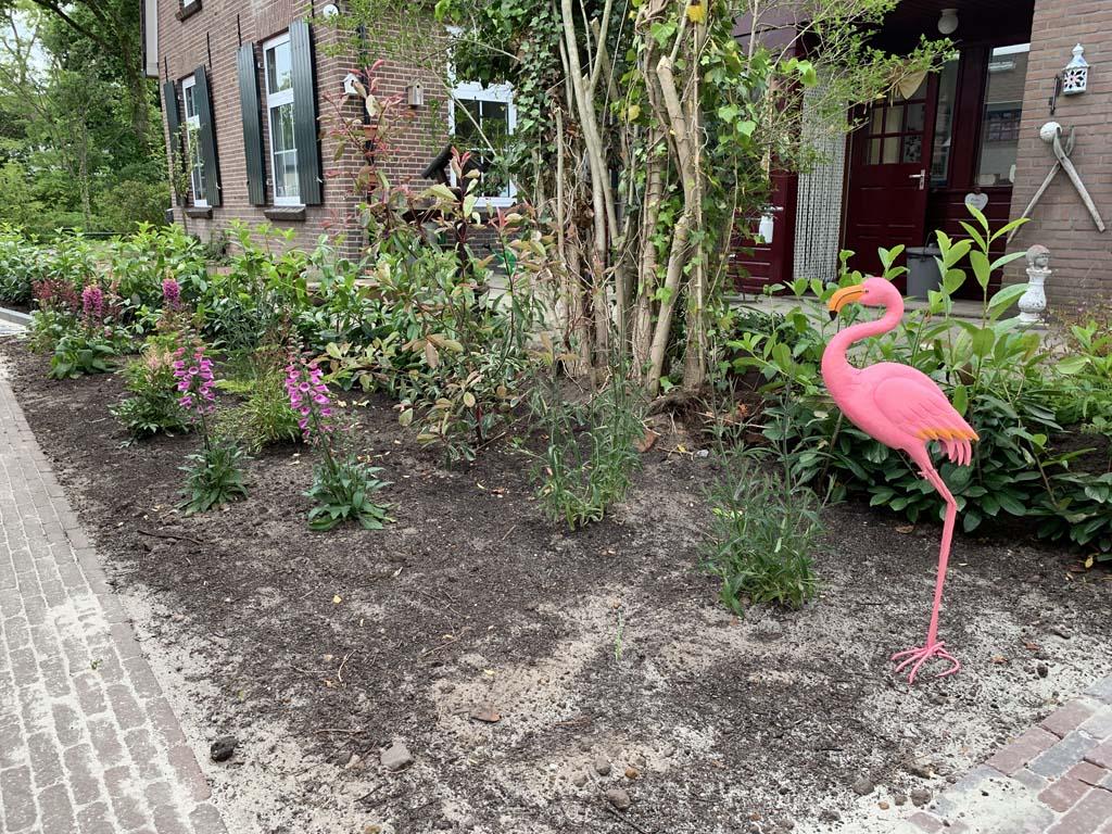 Onze Duitse flamingo zorgt voor een extra vakantiesfeertje.