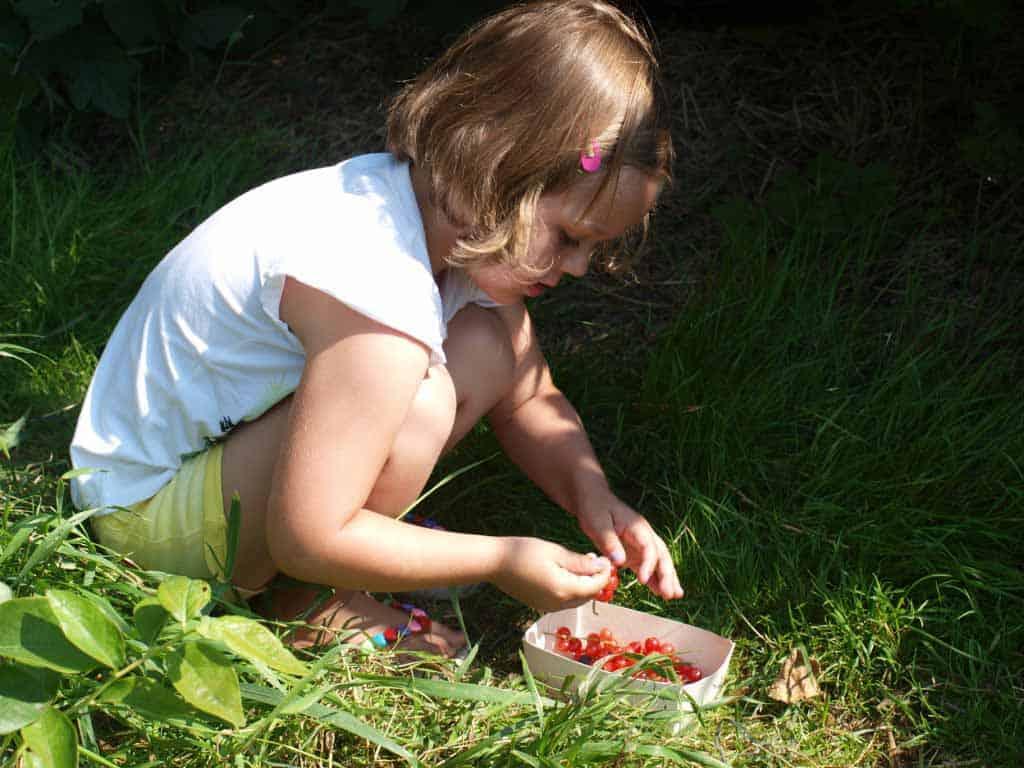 Pluk fruit en bloemen bij de pluktuin in Aagtekerke