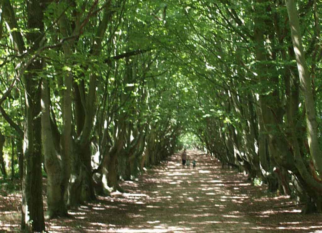 Bijzonder mooie lanen tijdens de wandeling door natuurgebied de Manteling