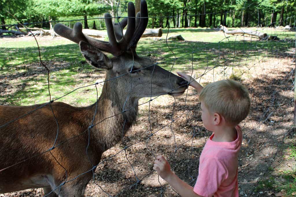 Een 'papa-hert', volgens zoon T. van 6 jaar.