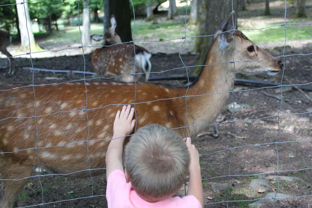 De dieren zijn behoorlijk tam en laten zich goed zien en soms aaien.